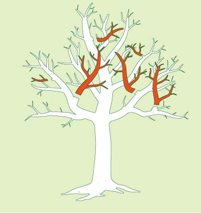Baumkornenpflege bei der bei der kranke und beschädigte Ästen ausgeschnitten werden