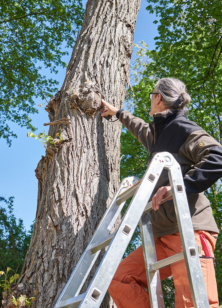 Bäume sollten regelmäßig kontrolliert werden