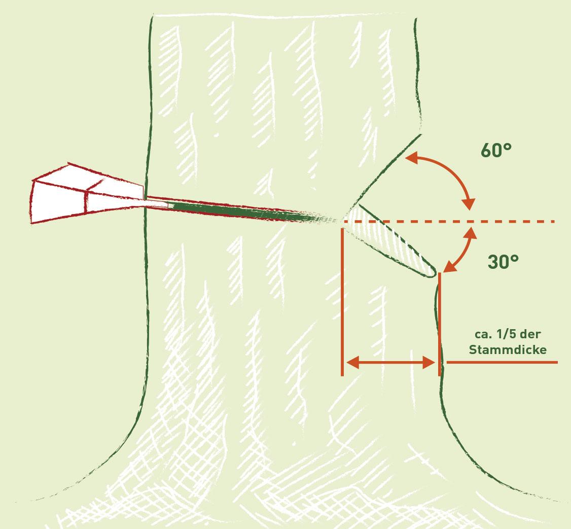 Einkerben des Baumstamms