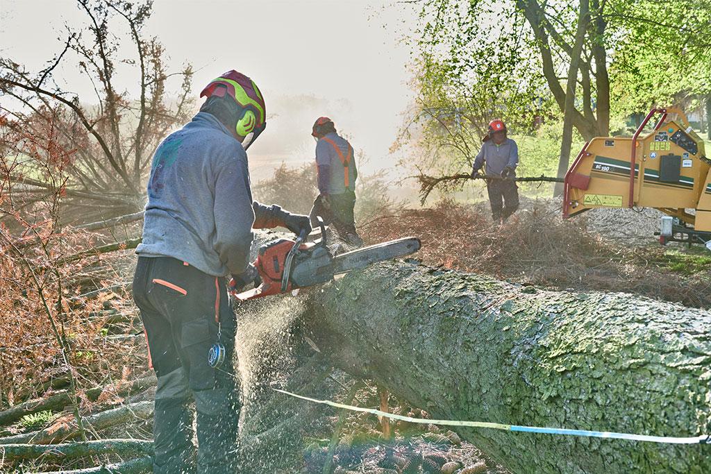 Baumfaellen ist Teamarbeit