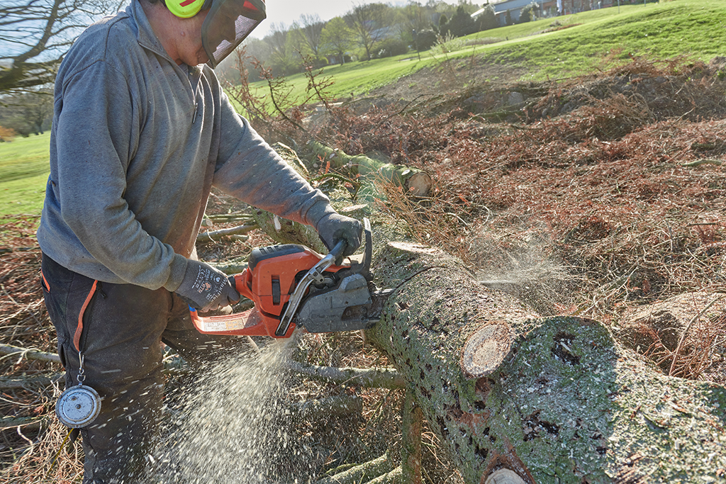 Bäume und Gefahrbäume sicher fällen