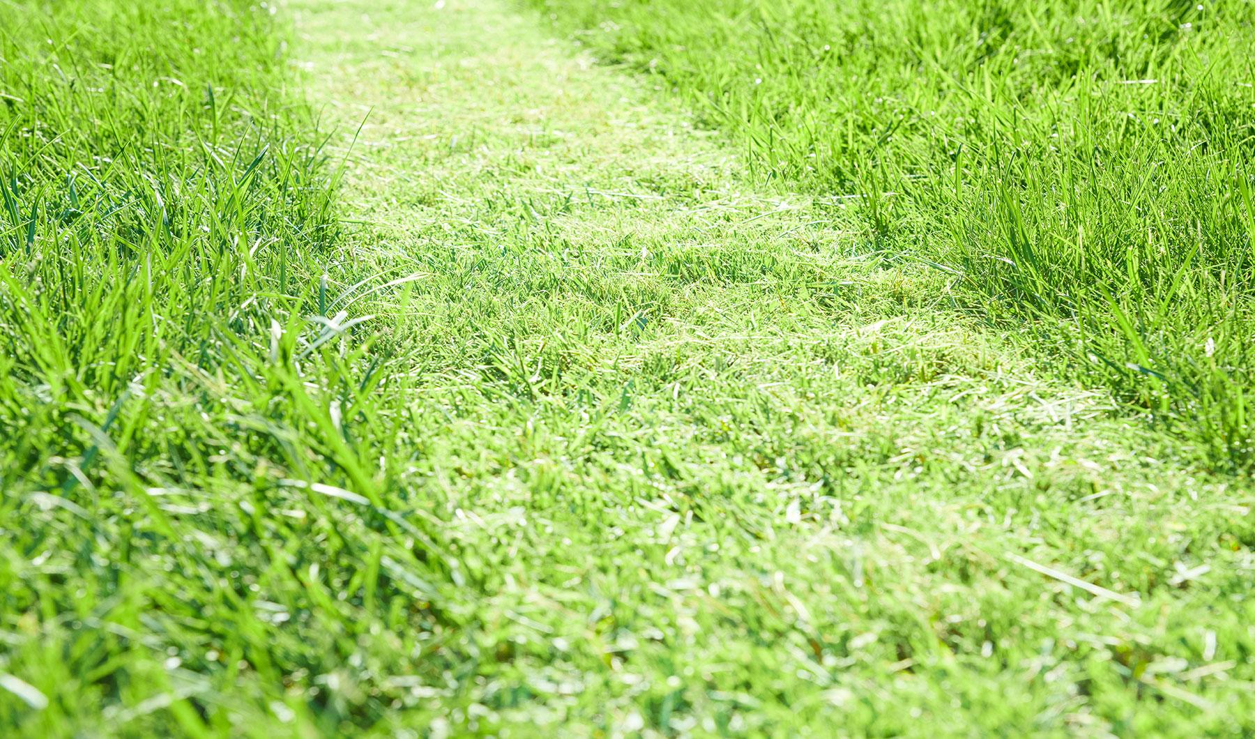 Tipps für einen gesunden Rasen