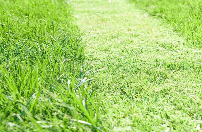 Rasen richtig anlegen, maehen und pflegen