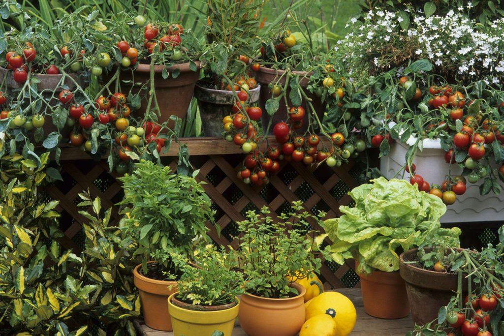 Dachgärten und kleine Balkongärten