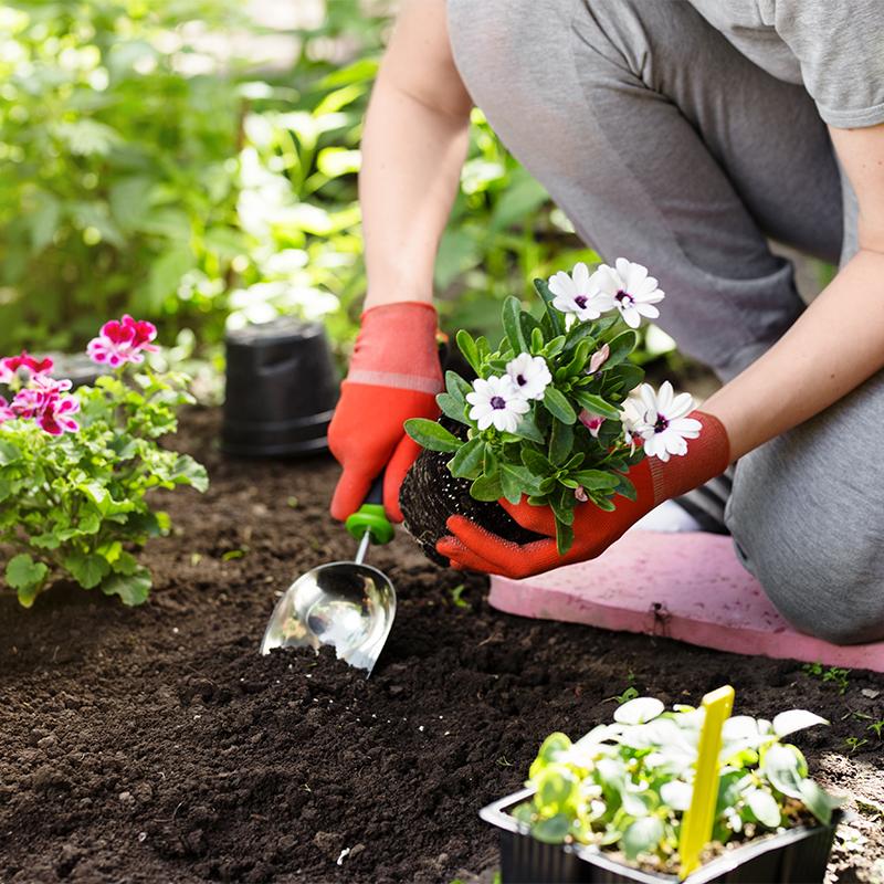 Blumenbeete und Staudenbeete bepflanzen und pflegen