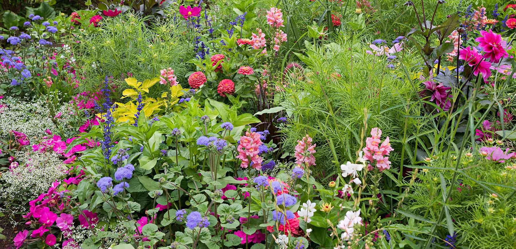Professionelle Beetpflege und Gartenreinigung