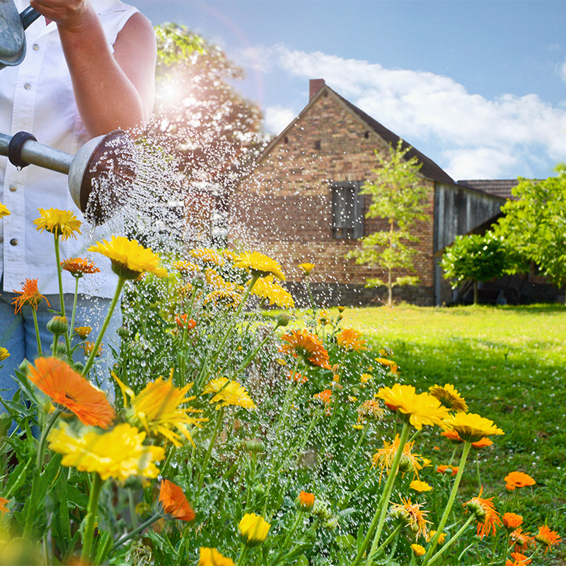 Blumen von Hand gießen oder automatisiert mit Sprinkleranlage