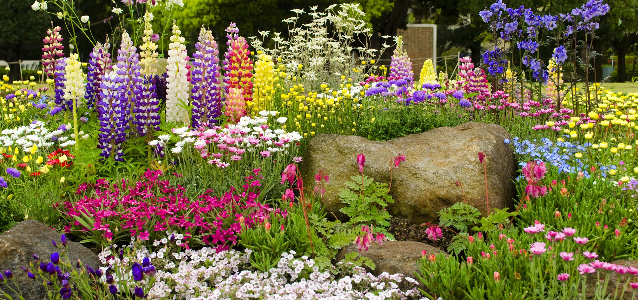 Blumen- und Staudenbeete, die Hingucker in jedem Garten.