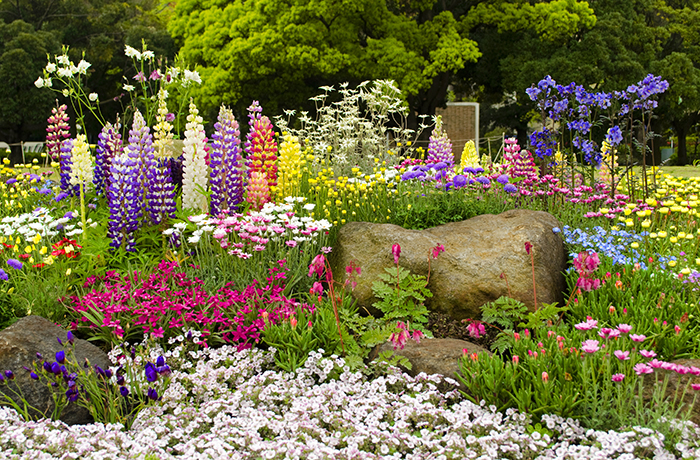 Farbenprächtiges Blumenbeet