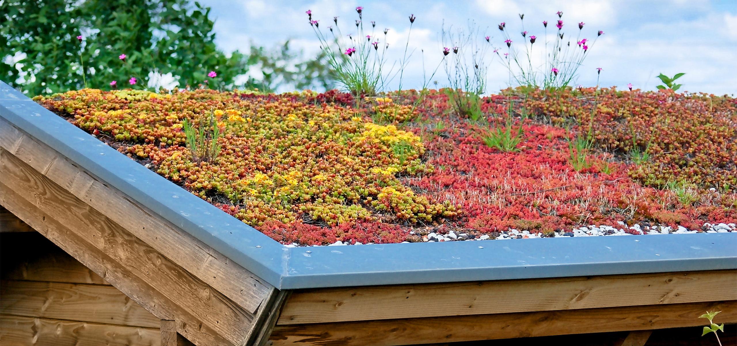 Dachbegrünung und Pflanzen für grüne Hausdächer und Garagen