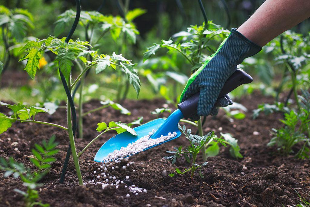 Gartenpflege mit Düngen und Mulchen