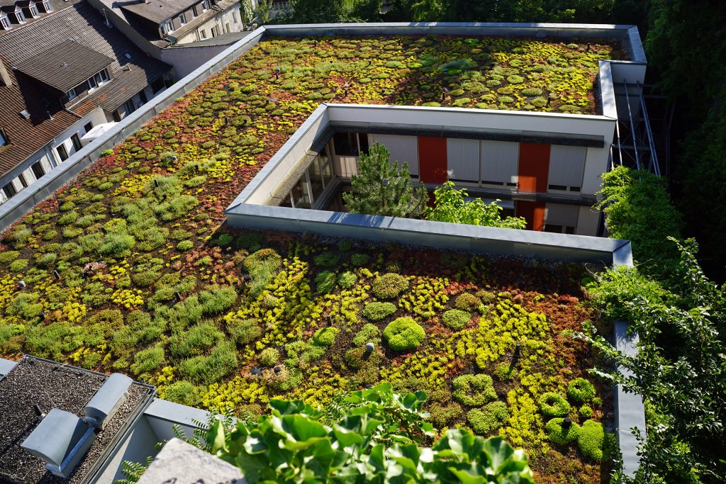 Extensivbegrünung – Niedrig wachsende Dachbepflanzung.