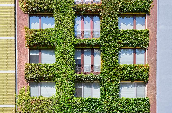 Fassadenbegrünung mit Kletterpflanzen und Ranken