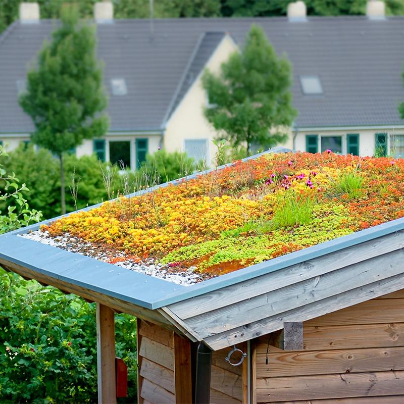 Gartenschuppen mit bepflanztem Dach