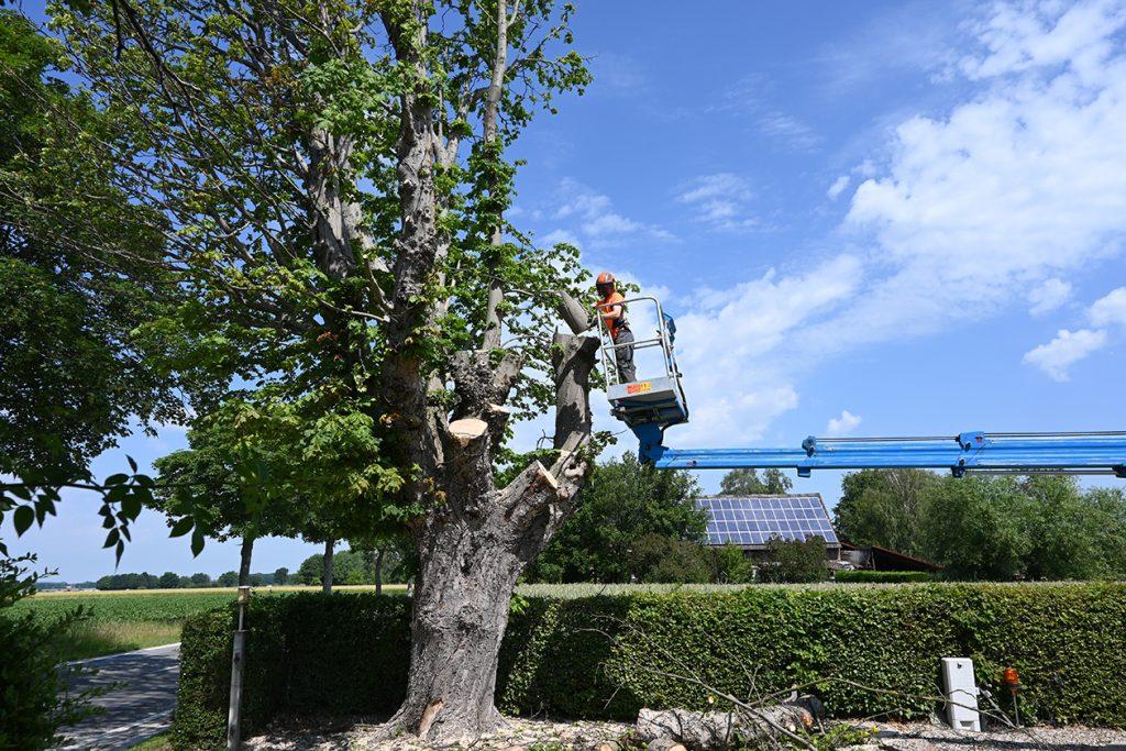 Gefahrbaumfällung mit Hubsteiger