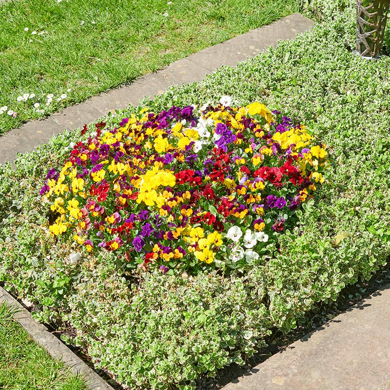 Grabpflege und Dauergrabpflege von Ihrem Gärtner