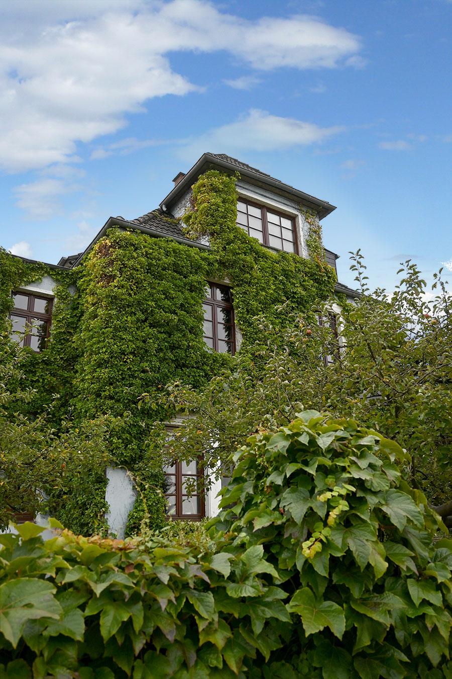 Fassadenbegrünung für ein bessere Hausklima