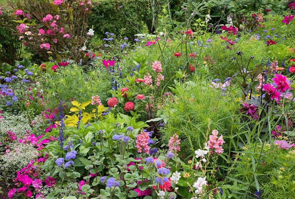 Die richtige Pflanzenauswahl für bunte Staudenbeete und Blumenbeete