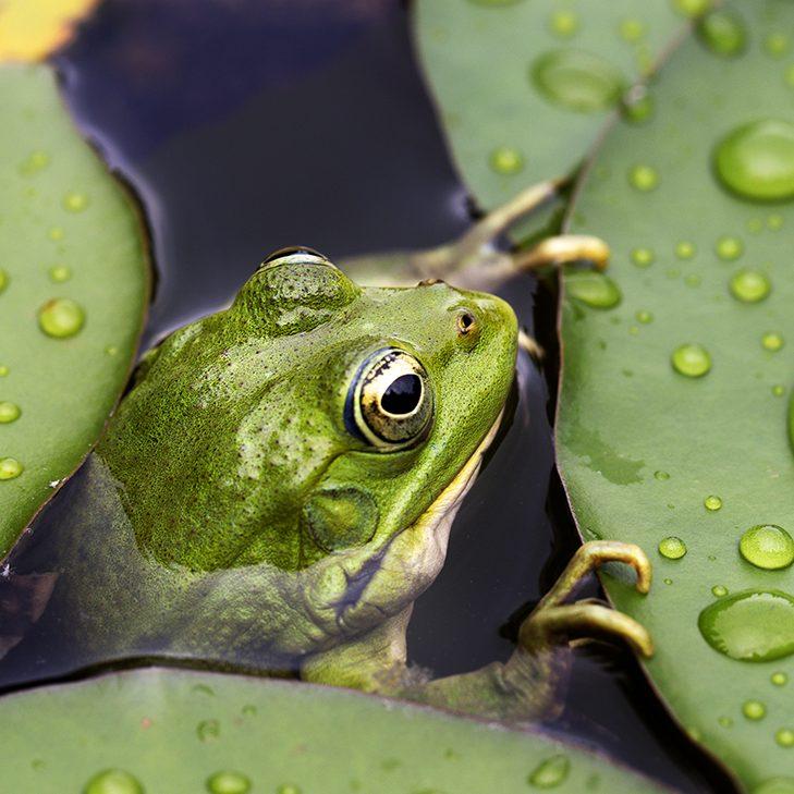Naturnaher Gartenteich für mehr Artenvielfalt in Ihrem Garten