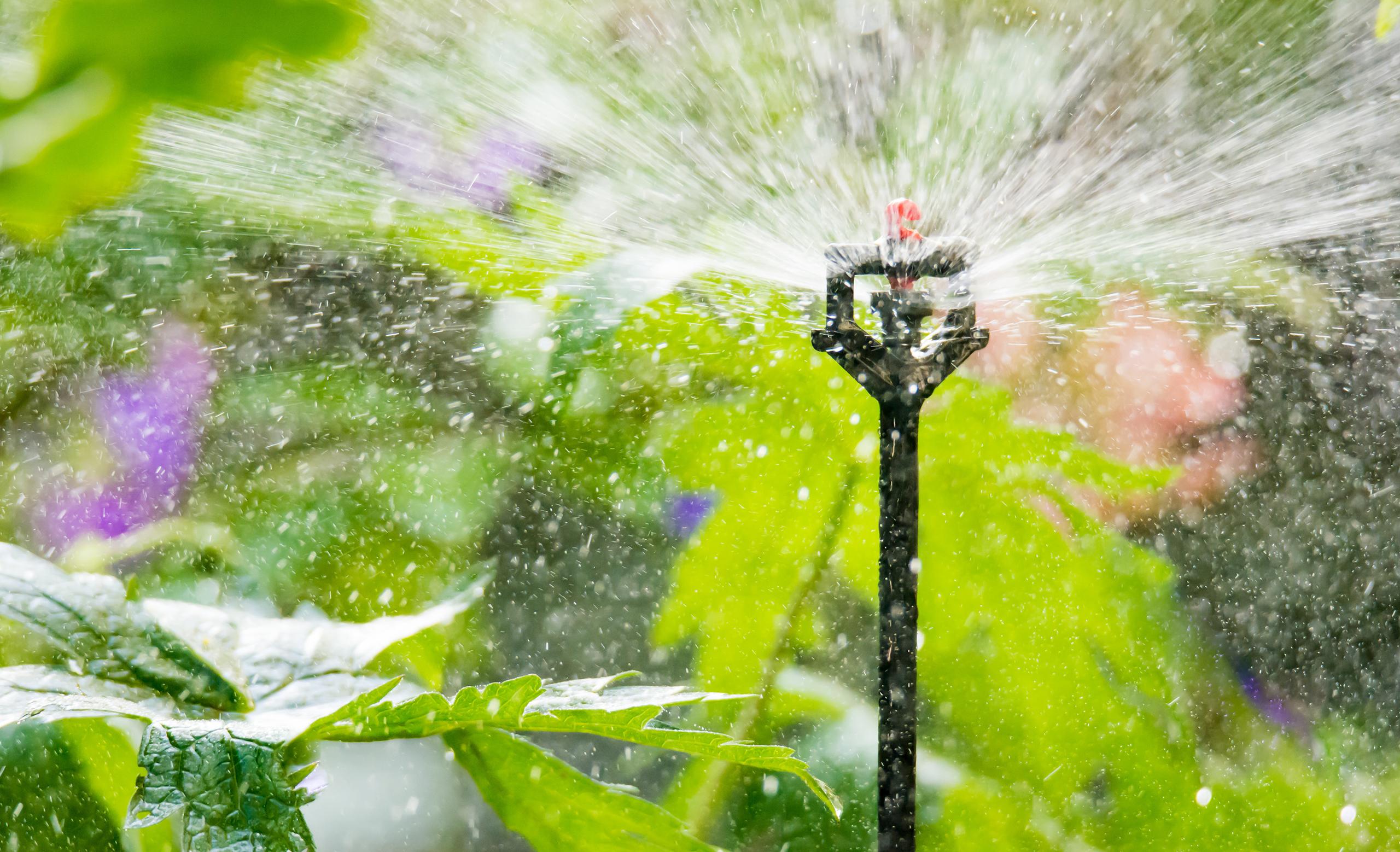 Automatische Bewässerung mit Rasensprenger oder Rasensprinkler