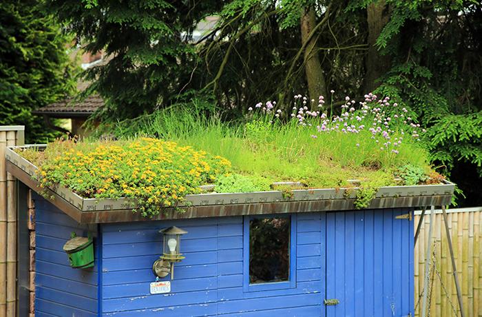 Dachbegrünungen für Häuser, Garagen und unsere Umwelt