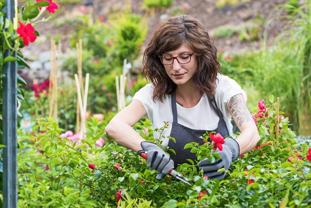 Staudenbeete und Blumenbeet sollten regelmäßig zurück geschnitten werden