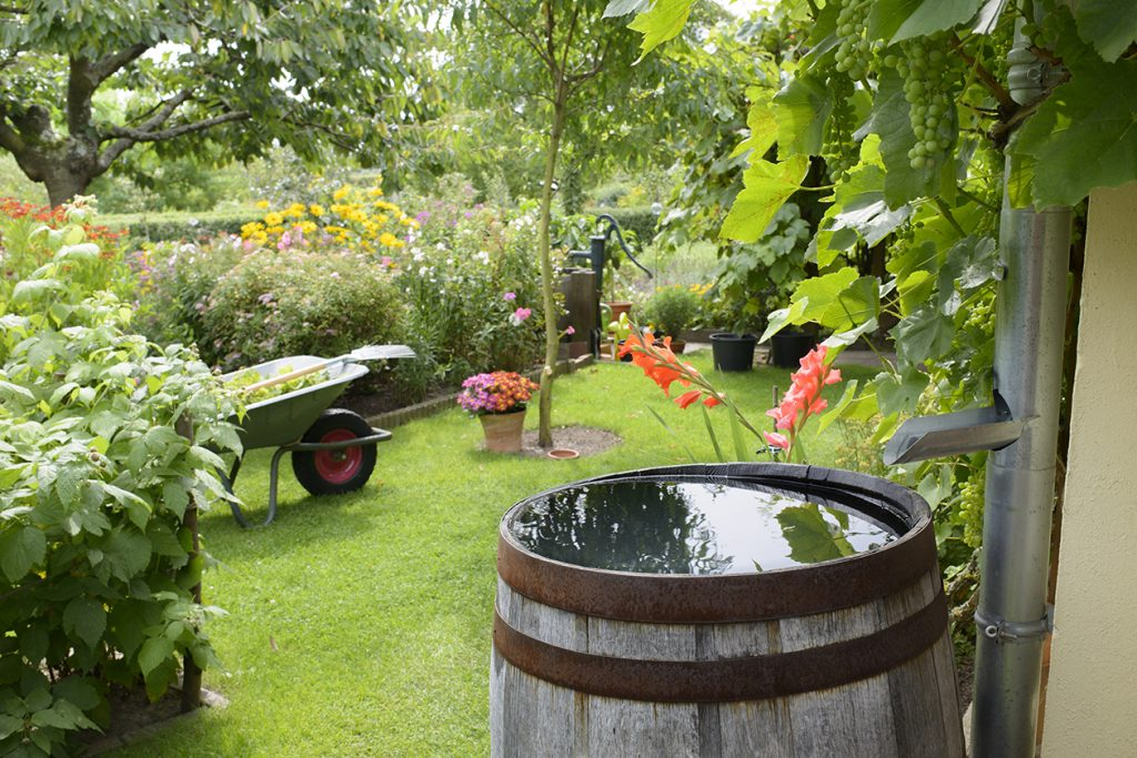 Regenwasser ist immer die beste Wahl für eine Gartenbewässerung.