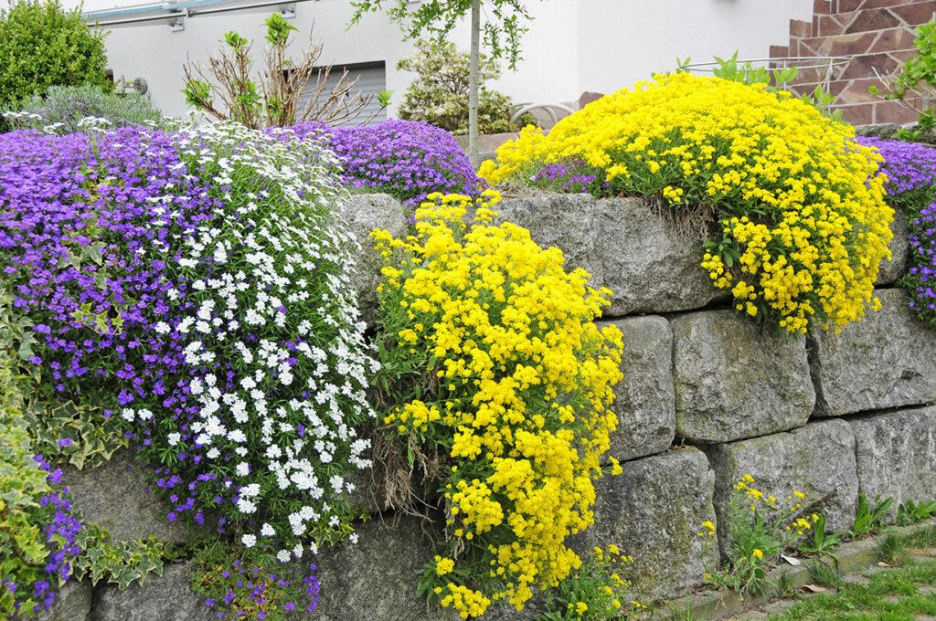 Trockenmauer aus Naturstein mit farbenfroher Bepflanzung