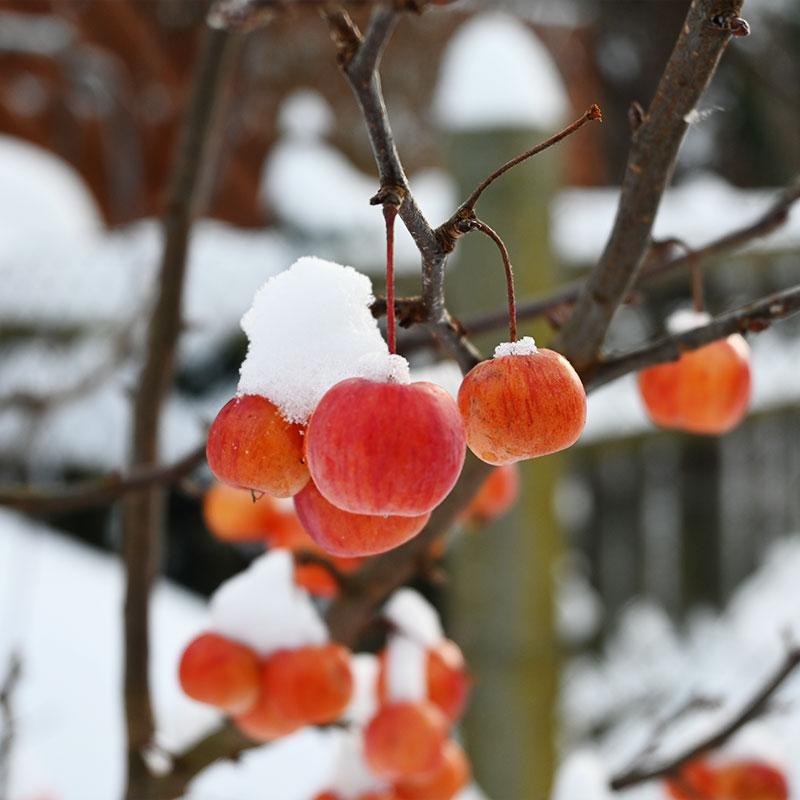 Winter im Obstgarten